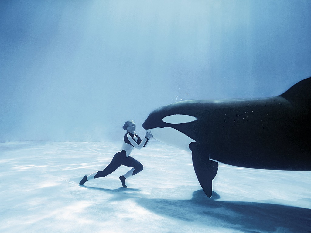 Very Funny All Wallpaper Funny killer whale cartoon 1024x768