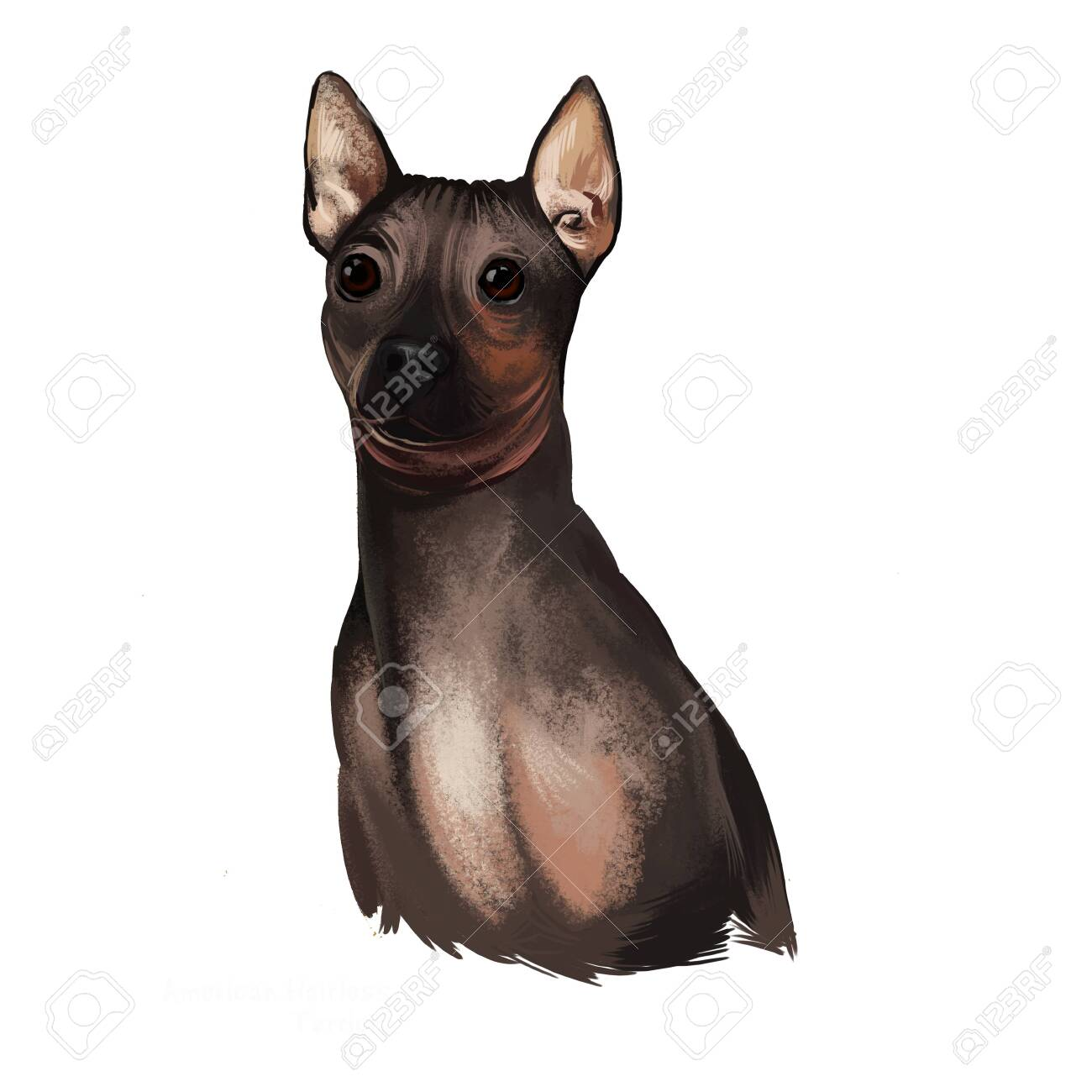 American Hairless Terrier AHT Dog Digital Art Illustration 1300x1300