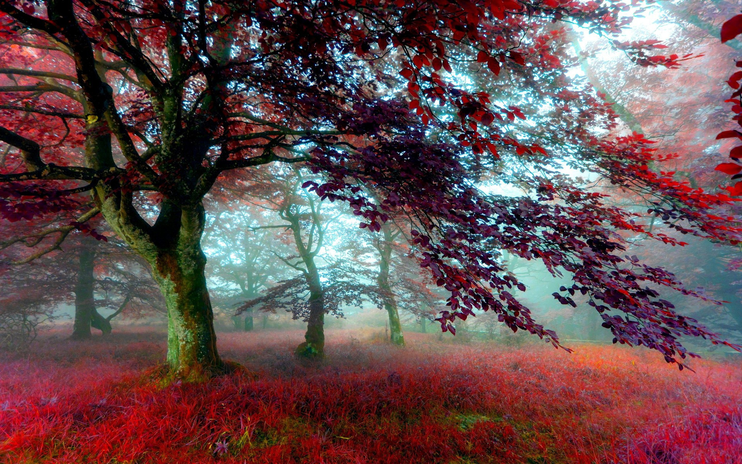 39+ Red Forest Wallpaper on WallpaperSafari