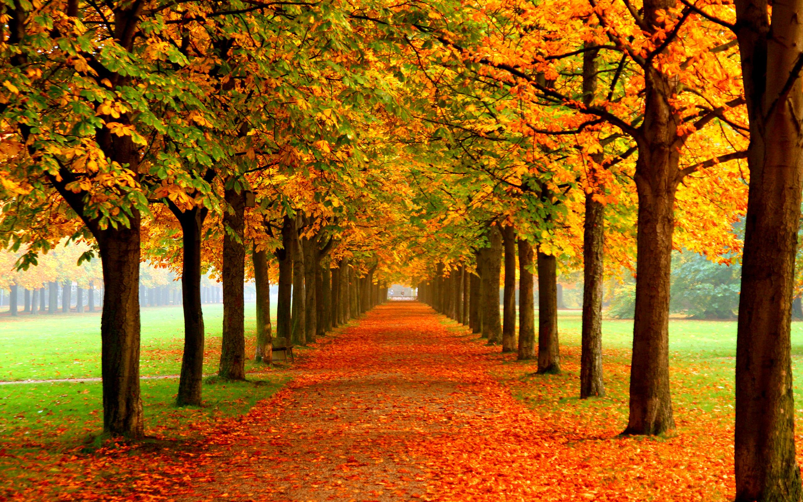 Autumn Wallpaper   Autumn Colors Wallpapers   HD 2560x1600