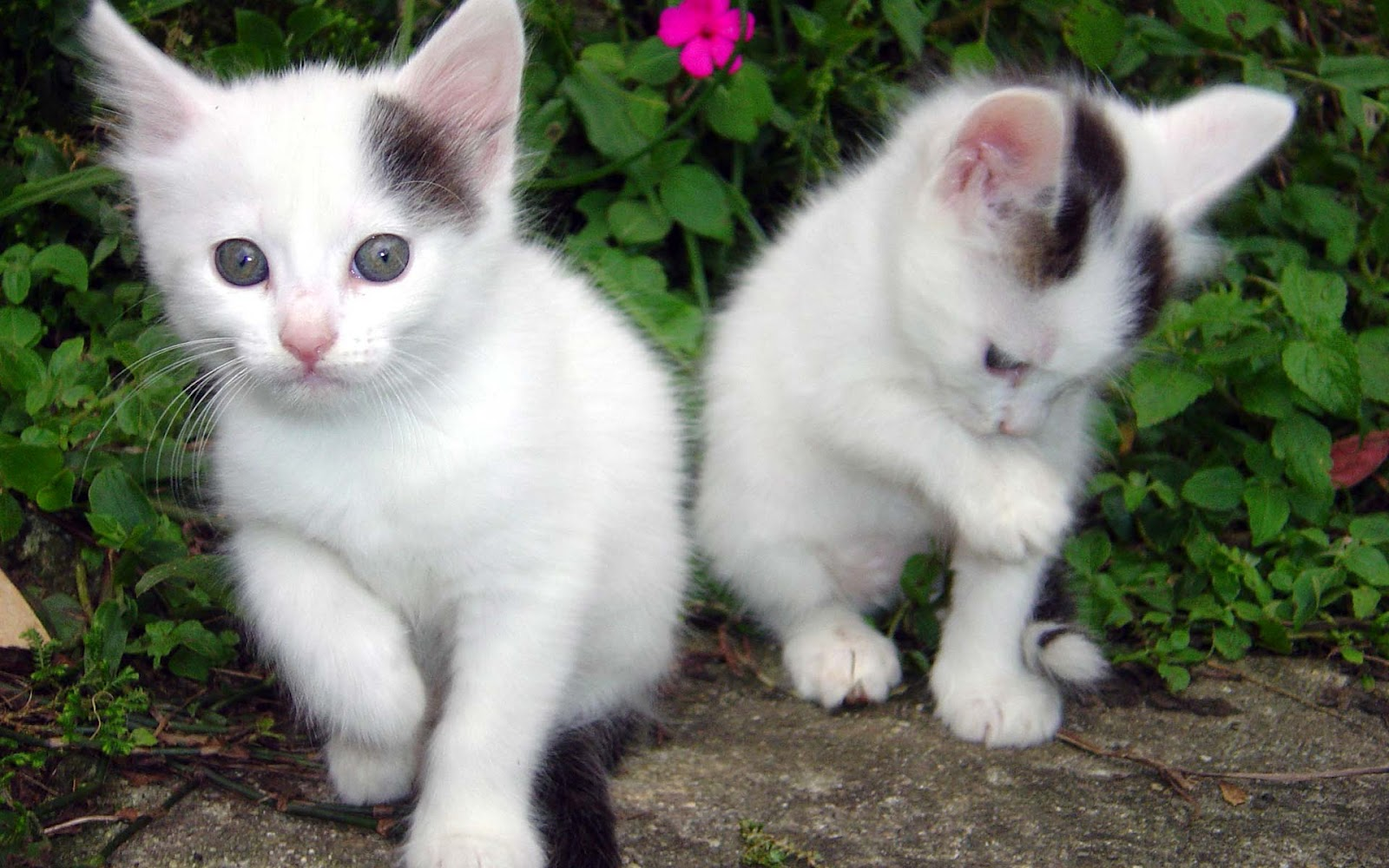 All Wallpapers Beautiful Cats Hd Wallpapers 1600x1000