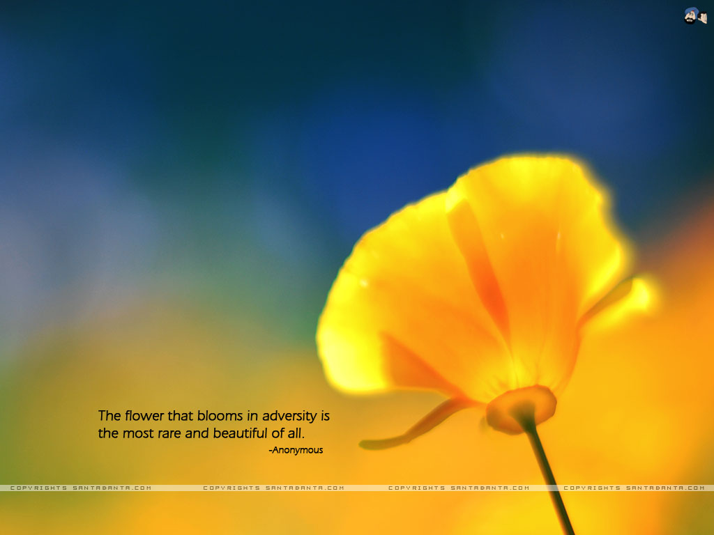 Motivational wallpaper on Beautiful The flower that blooms in 1024x768