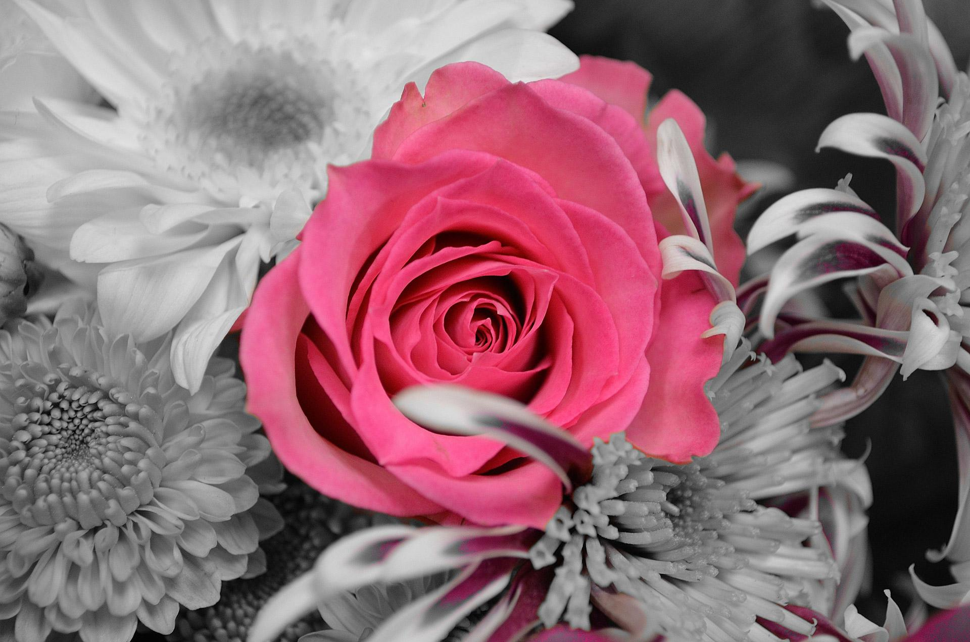1920x1272px pink and black flower wallpaper wallpapersafari pink and black flowers 90959 high quality and resolution 1920x1272 mightylinksfo