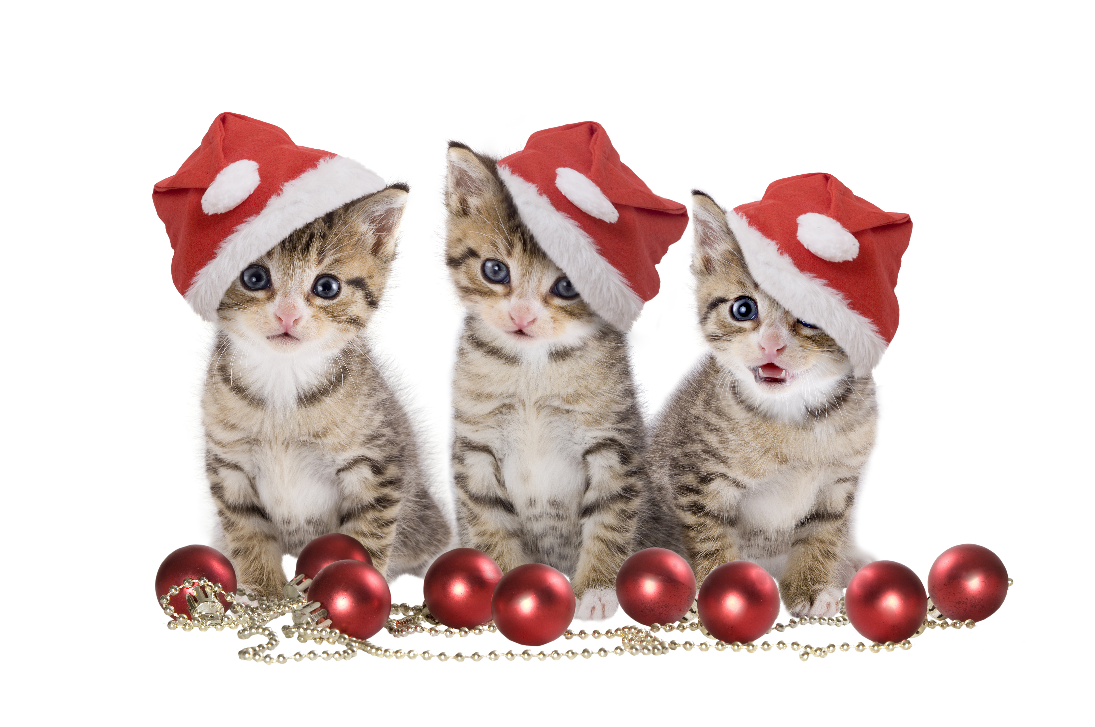 Free Christmas Wallpaper with Cats - WallpaperSafari