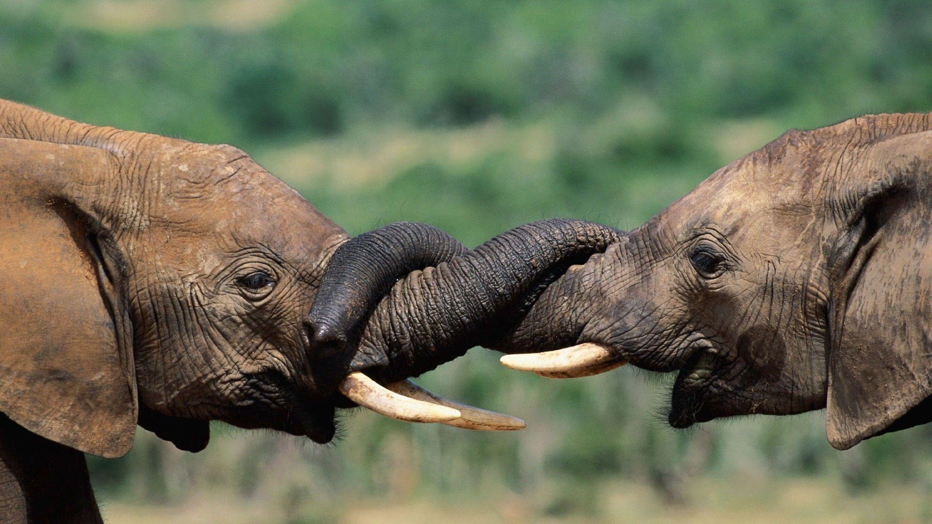 baby elephant wallpaper 1920x1080