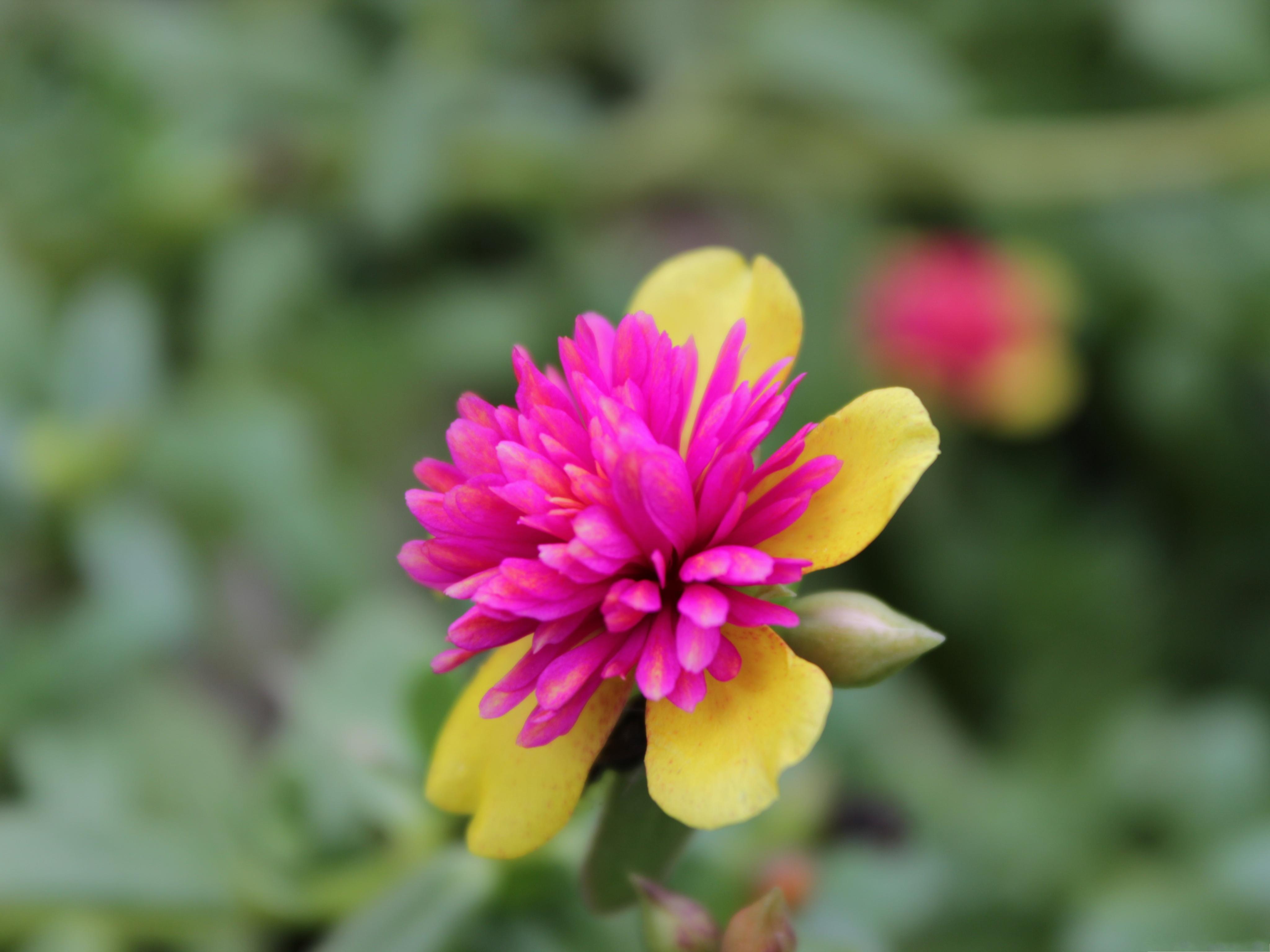 small flowers pics  pivot media, Beautiful flower