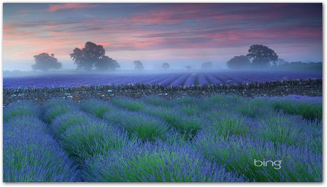 Bing Desktop For Xp Wallpaper PicsWallpapercom 640x366