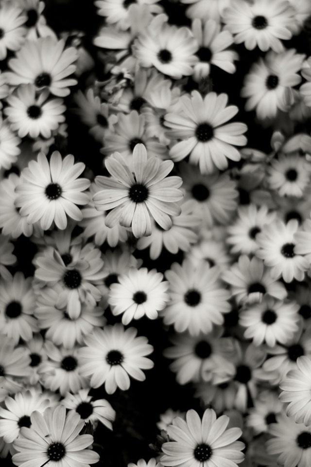 Black and White Flowers iPhone 4 Wallpaper and iPhone 4S Wallpaper 640x960