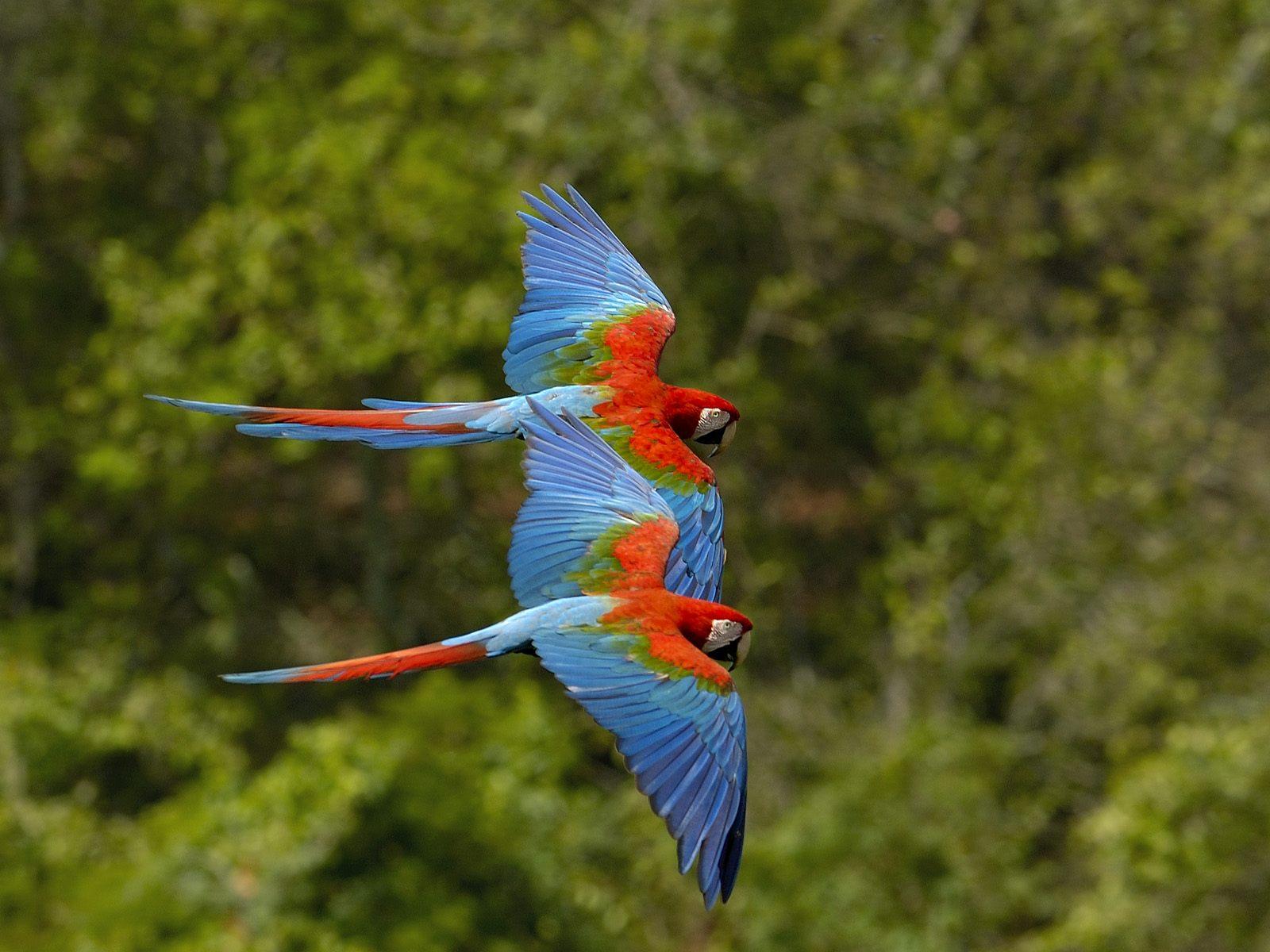 birds wallpapers birds wallpaper bird wallpaper bird 1600x1200