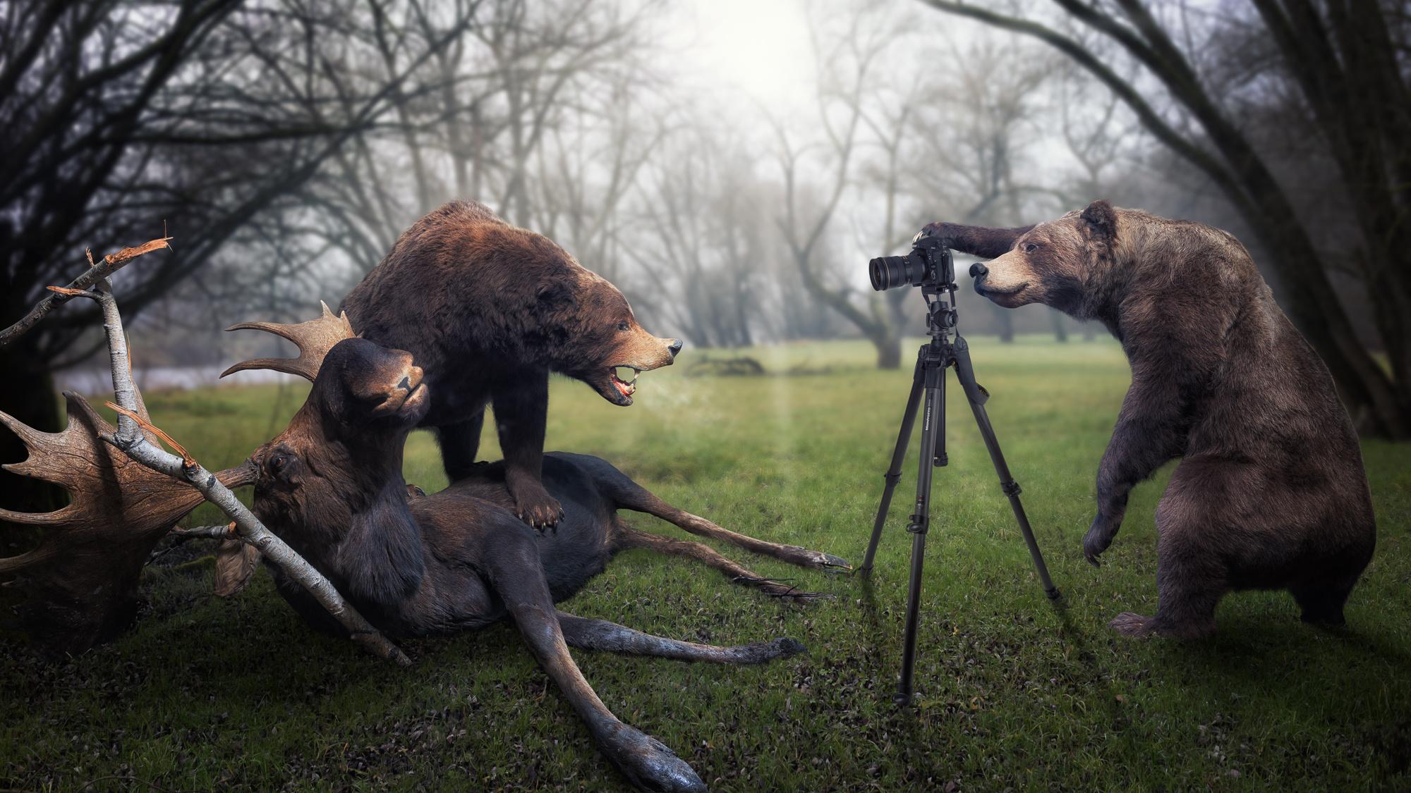 Trophy moose photographer bear wallpaper 2000x1125 228344 2000x1125