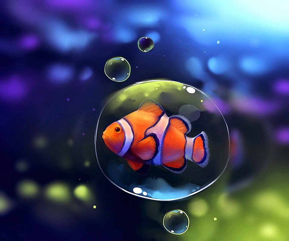 Desktop HD Wallpapers Downloads Clown Fish HD Wallpapers 960x800