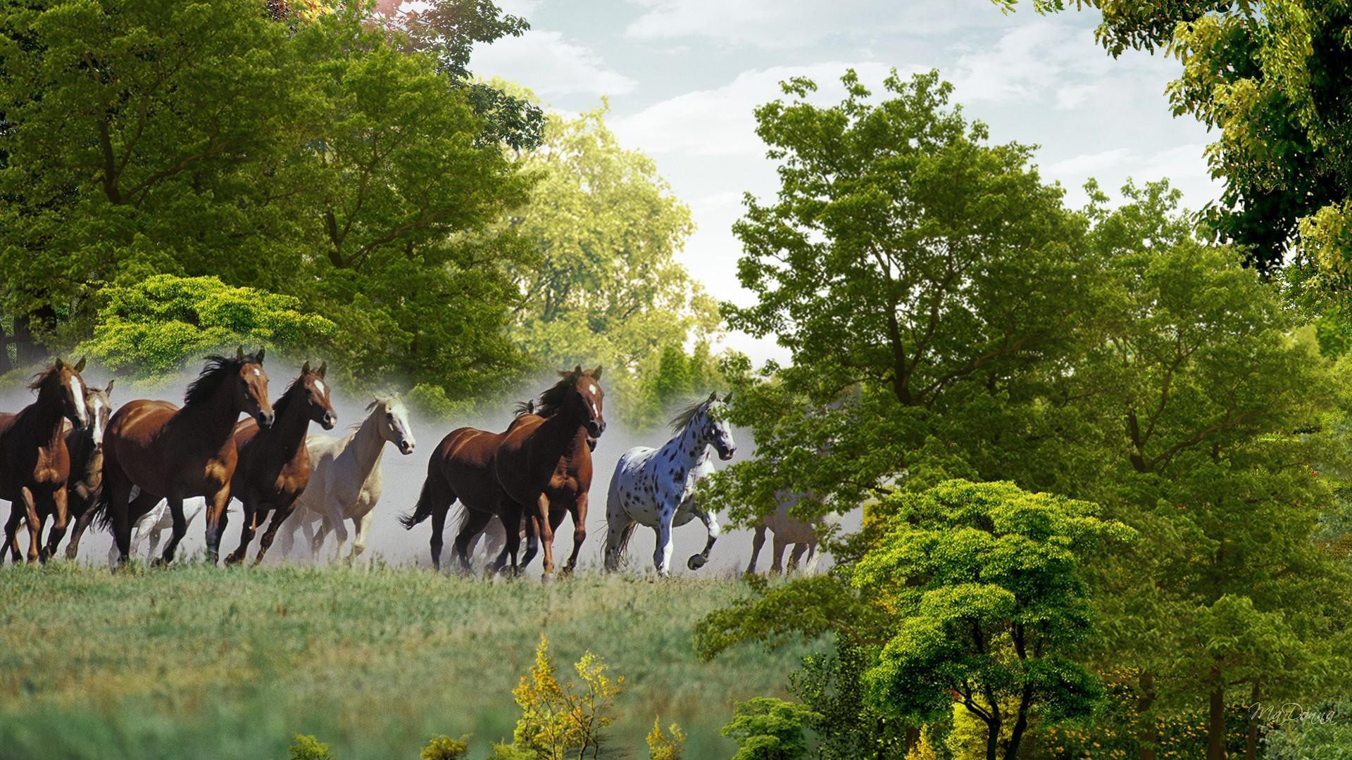 Running Horses Wallpaper - WallpaperSafari - photo#45
