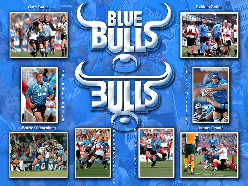 1024x768px Blue Bulls Wallpapers Wallpapersafari