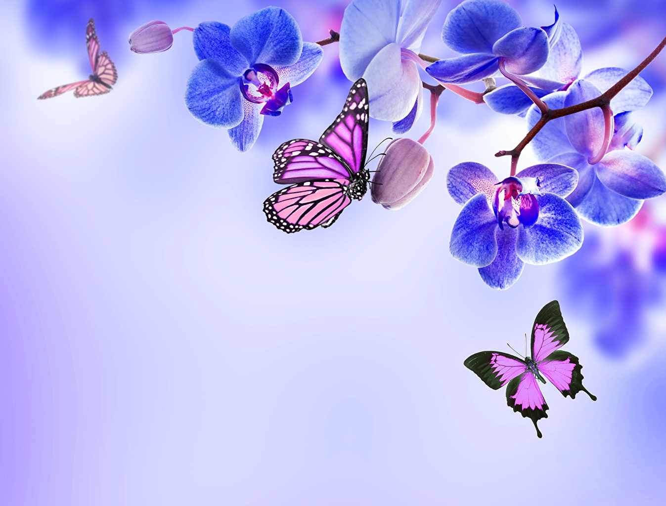 Wallpapers Monarch butterfly Butterflies Orchid Flowers 1347x1024