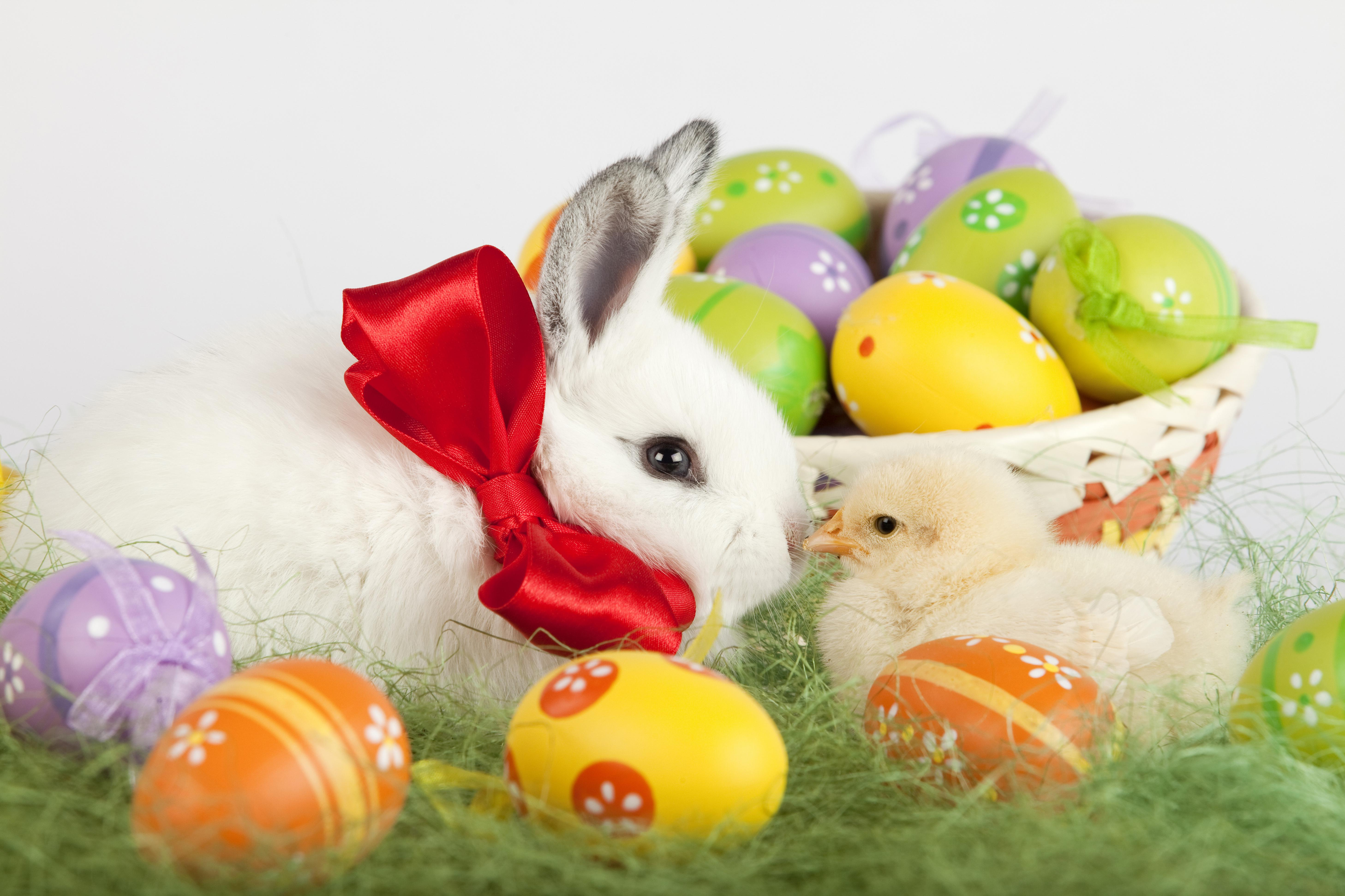 Easter bunny desktop wallpaper wallpapersafari - Easter desktop wallpaper ...