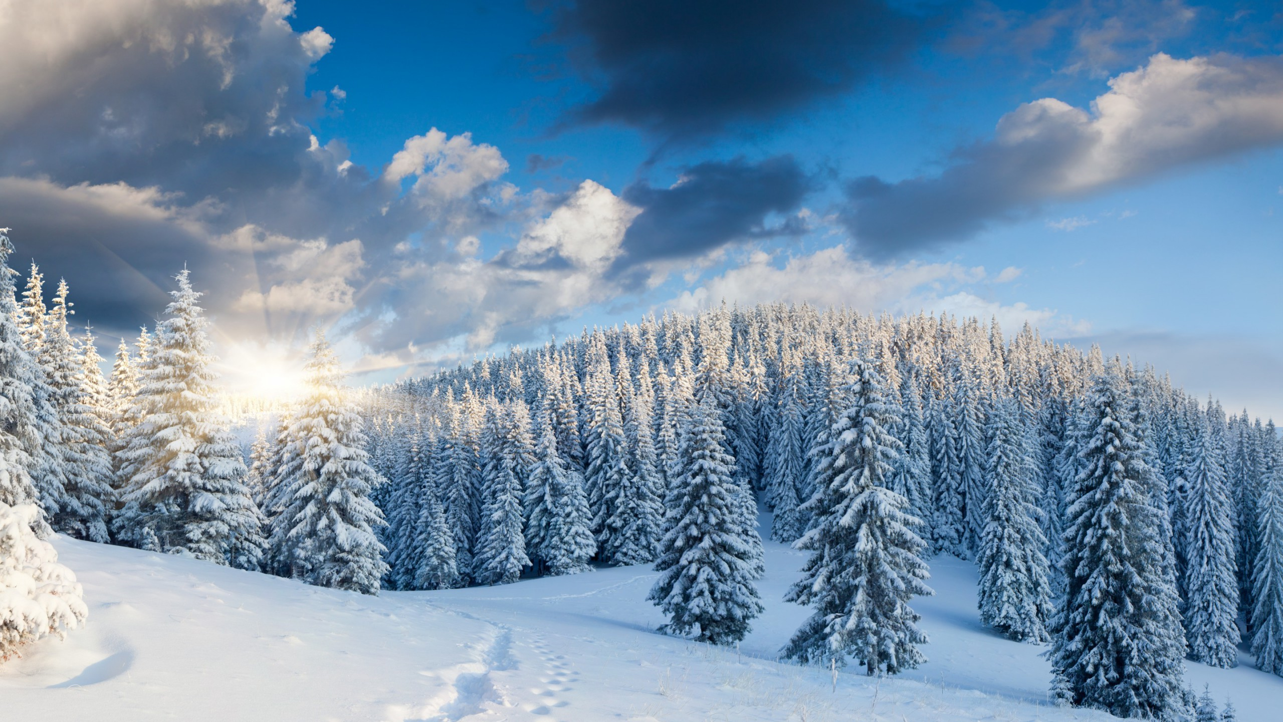 Winter Forest Wallpapers Images Photos Pictures Backgrounds 2560x1440
