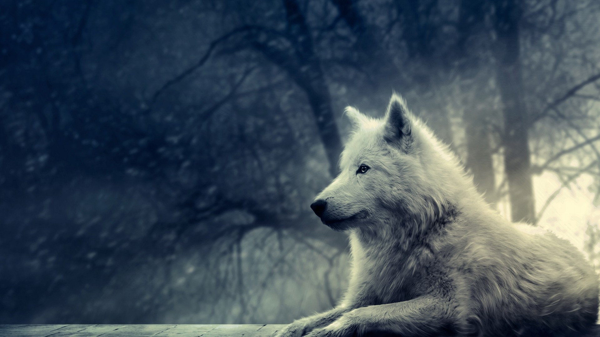 Wallpaper wolf white snow forest wallpapers animals   download 1920x1080