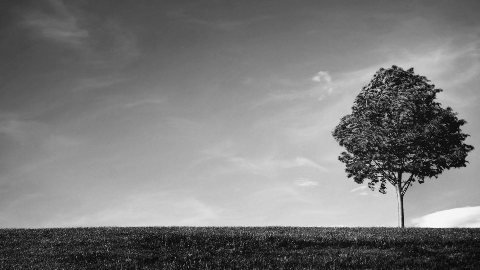 Tree Wallpaper Black And White 1920x1080