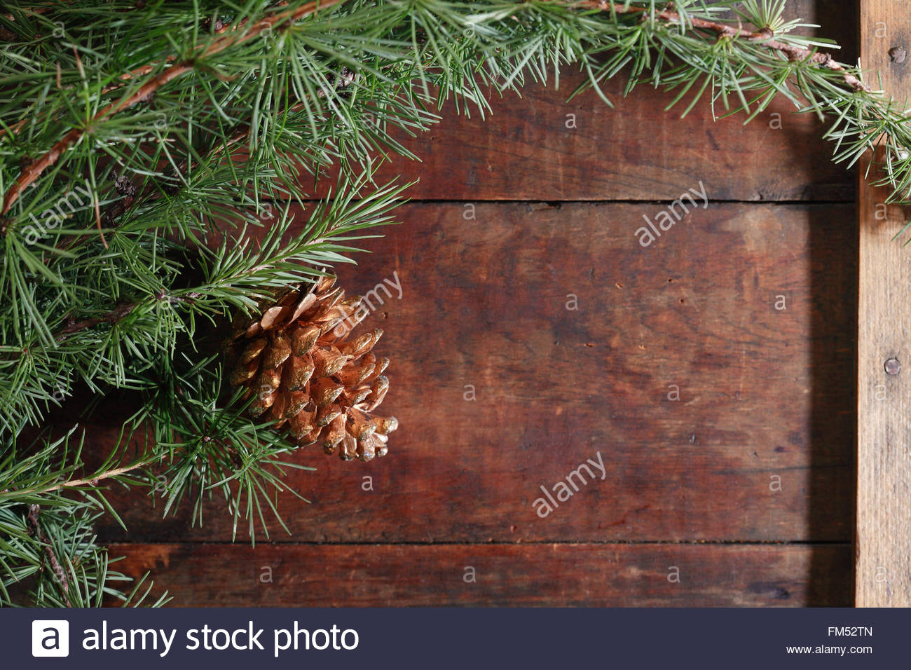Nice Christmas background made from lot of spruce twigs and cone 1300x956