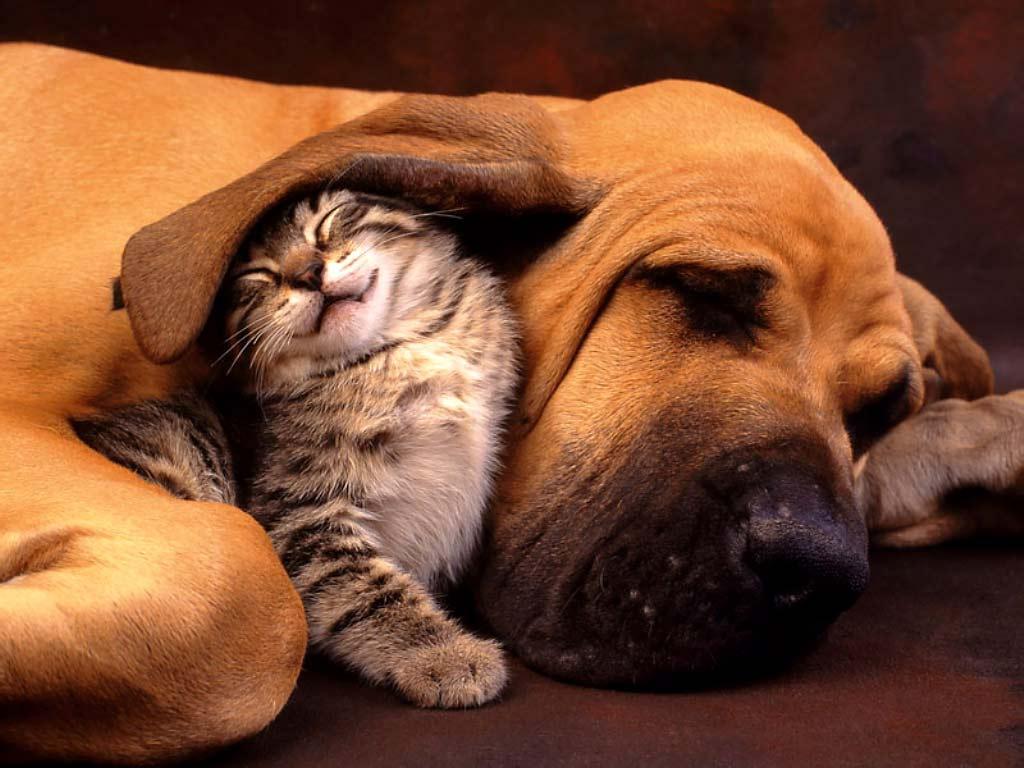 Desktop Wallpaper Gallery Animals Cat and Dog   the Best Friend 1024x768