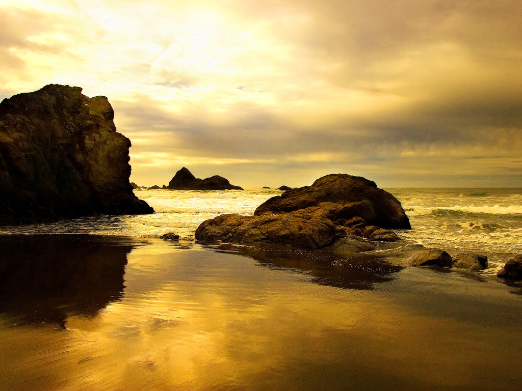 The Cat Sunset Beach Wallpapers for Desktop Backgrounds 1024x768