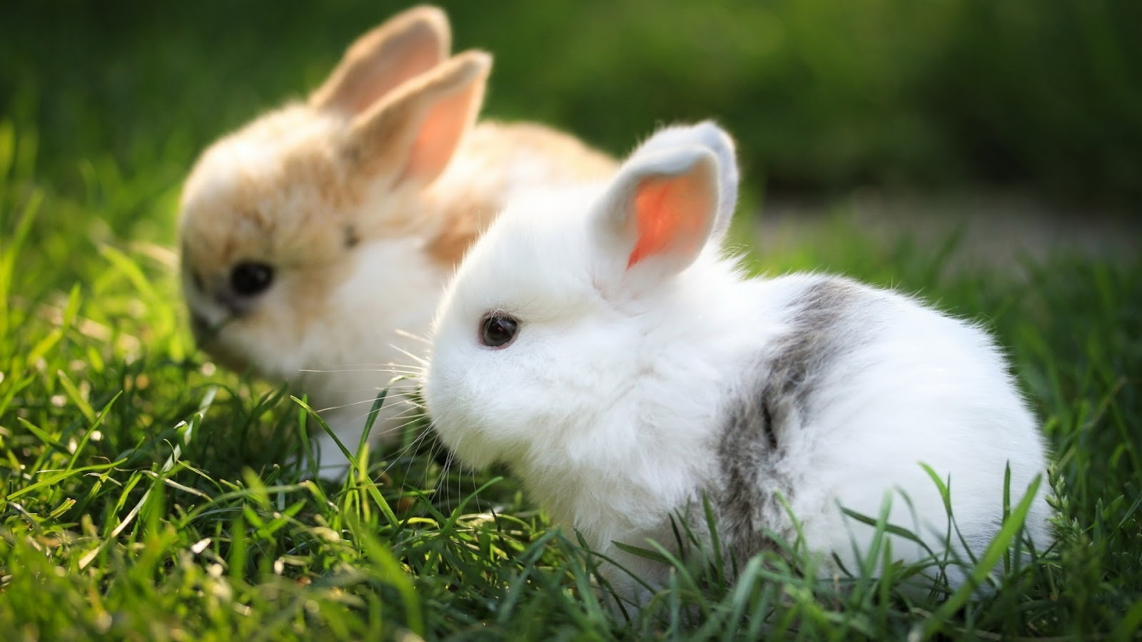 Your Wallpaper Cute Rabbit Wallpaper 1600x900