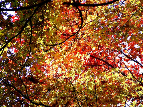 cute background cute background fall autumn trees leaves 500x375