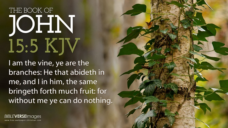 Bible Verse Wallpaper John 15 5 King James Version 725x407