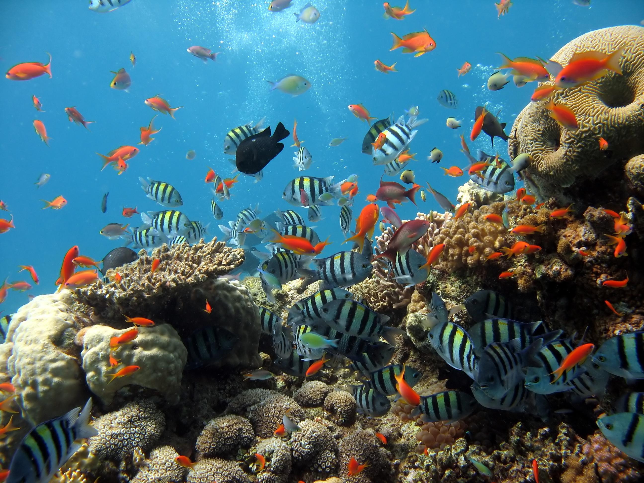 sea ocean coral aquarium fishing diving wallpaper   ForWallpaper 2592x1944