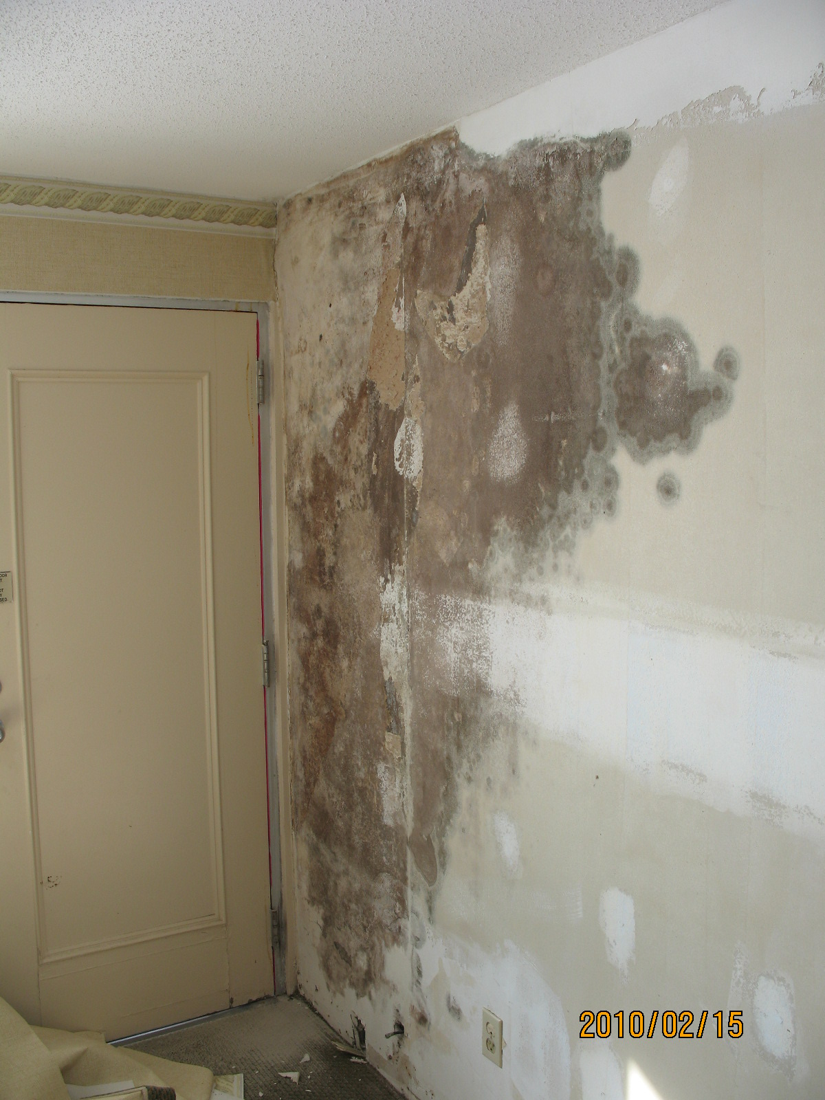 Mold under wallpaper wallpapersafari for Is there asbestos in old drywall