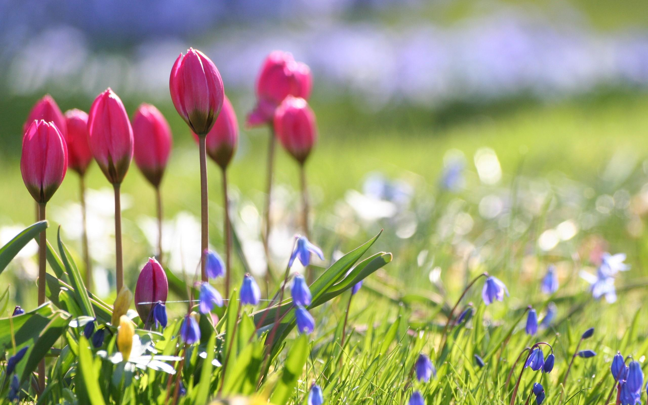 Spring flowers wallpapers HD 2560x1600