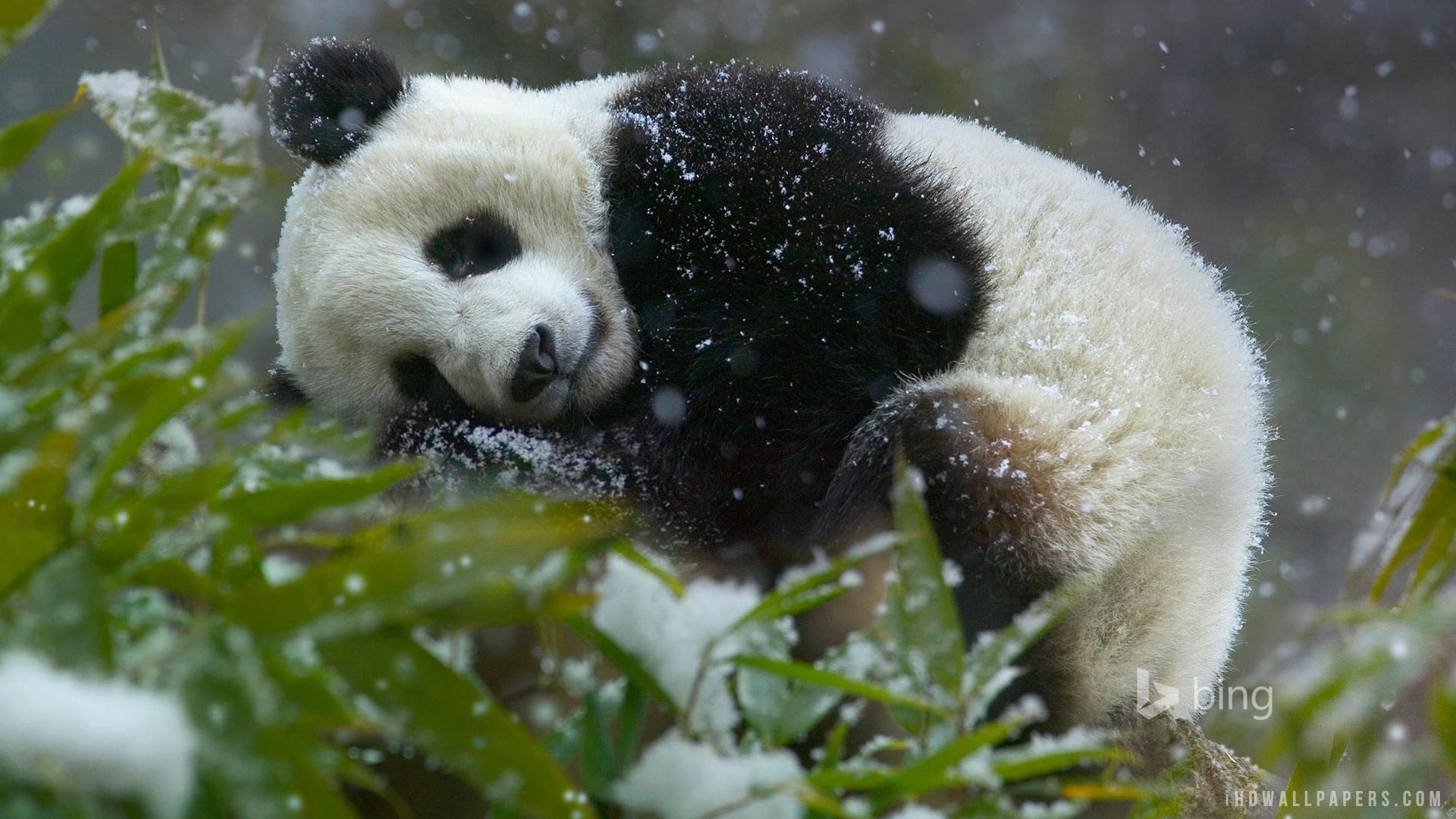 чистить панда на рабочий стол телефона обеспечение