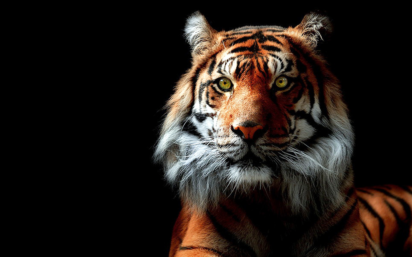 Related Wallpaper for Tiger Wallpaper 3D HD 1440x900
