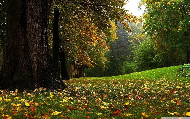 forest in autumn autumn landscape desktop wallpaper 1440x900jpg 1440x900