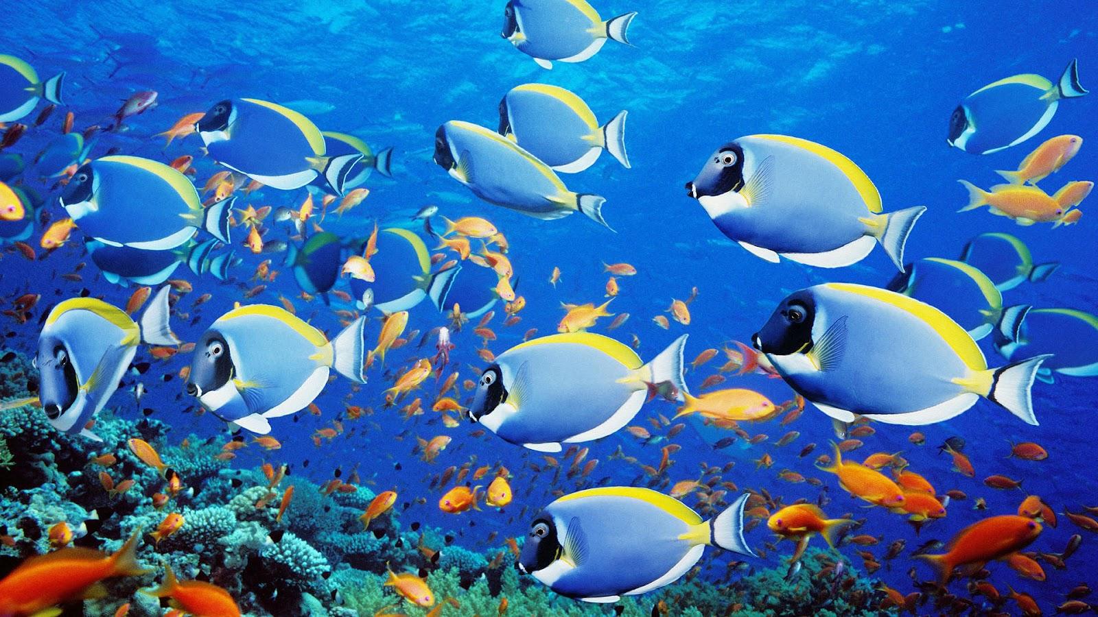 Unique Wallpaper Exotic Fish Wallpaper HD 1600x900