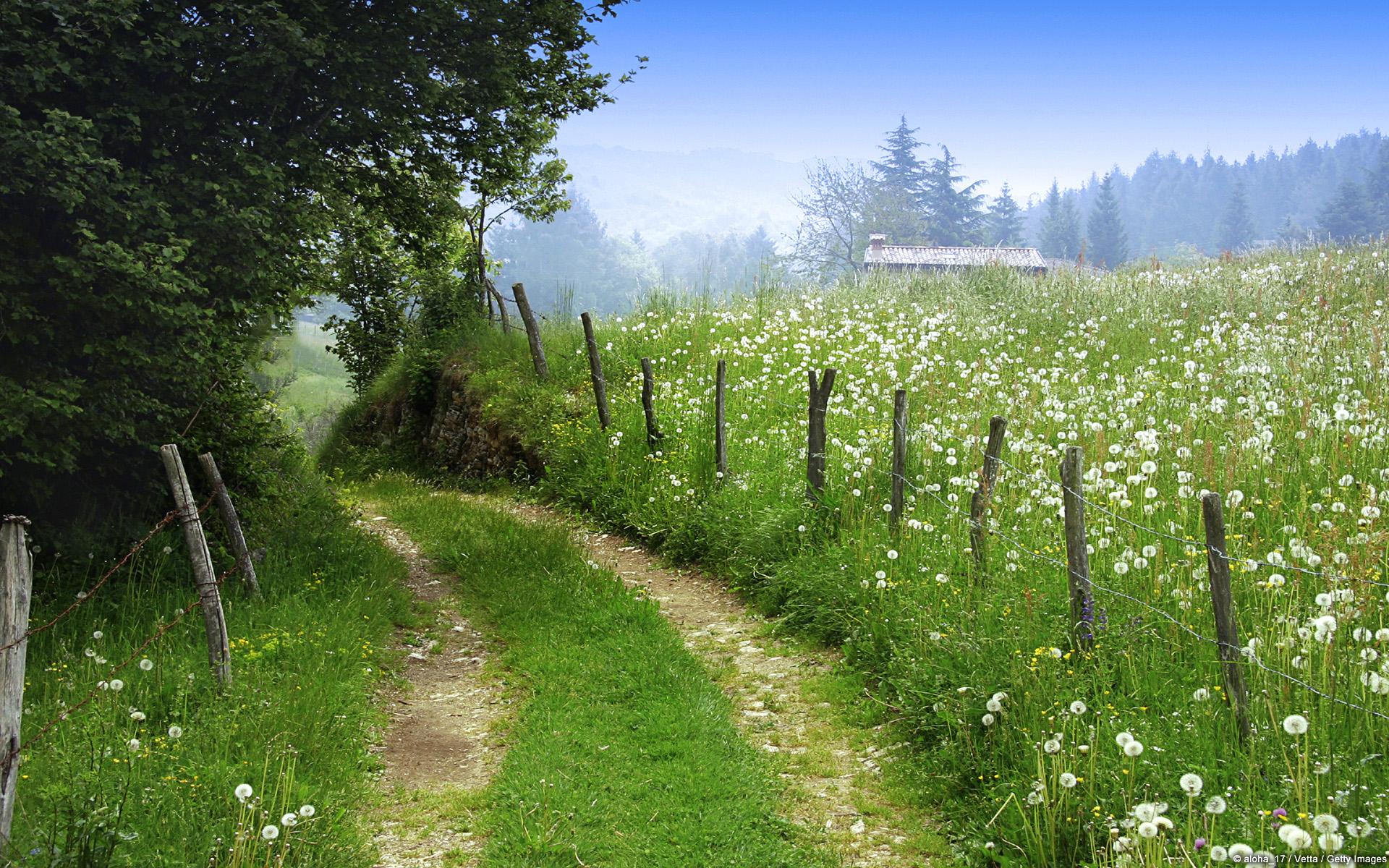 Scarica questo sfondo Campo di fiori selvatici 1920x1200