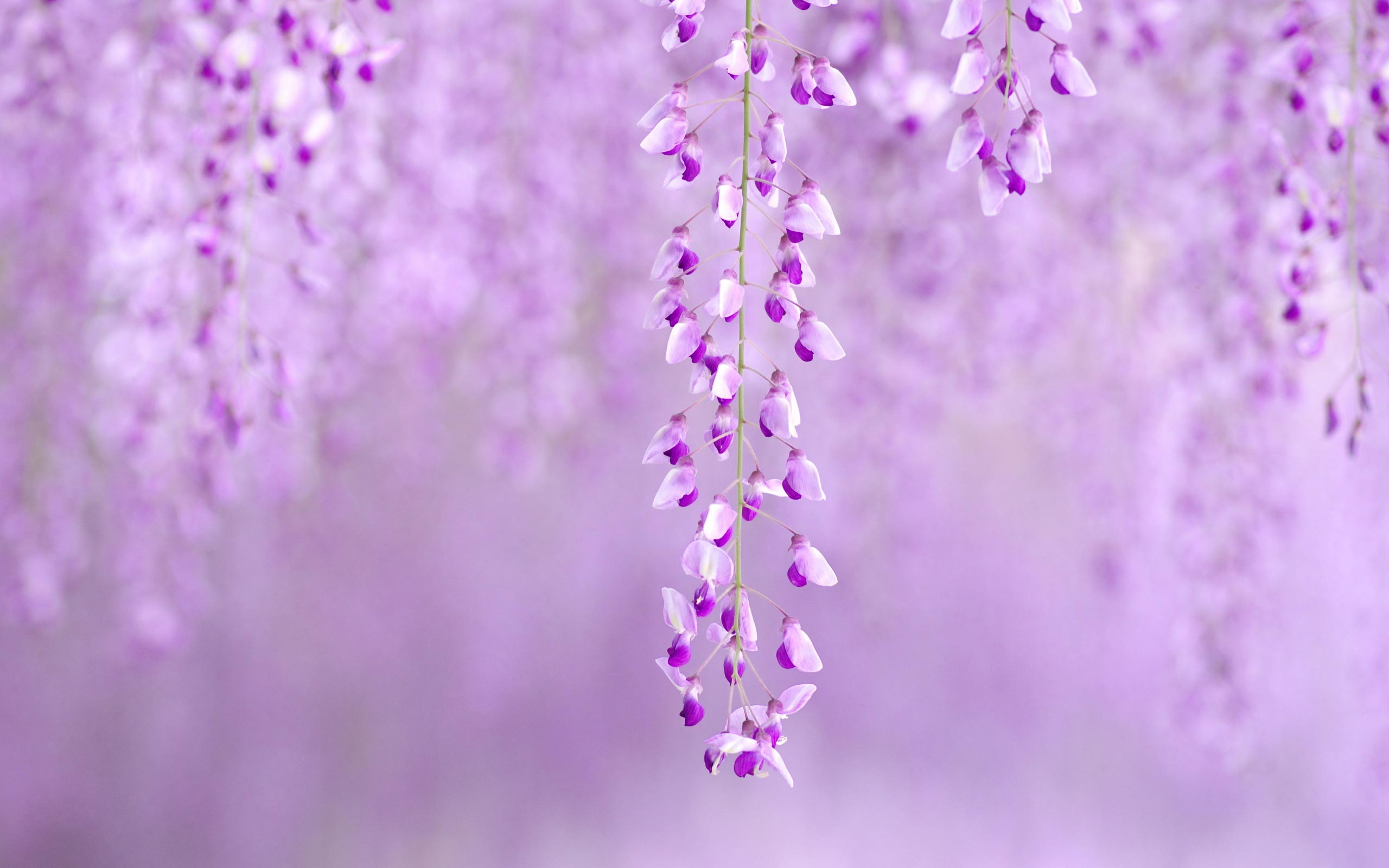 Wallpaper Spring Flowers Background 2560x1600