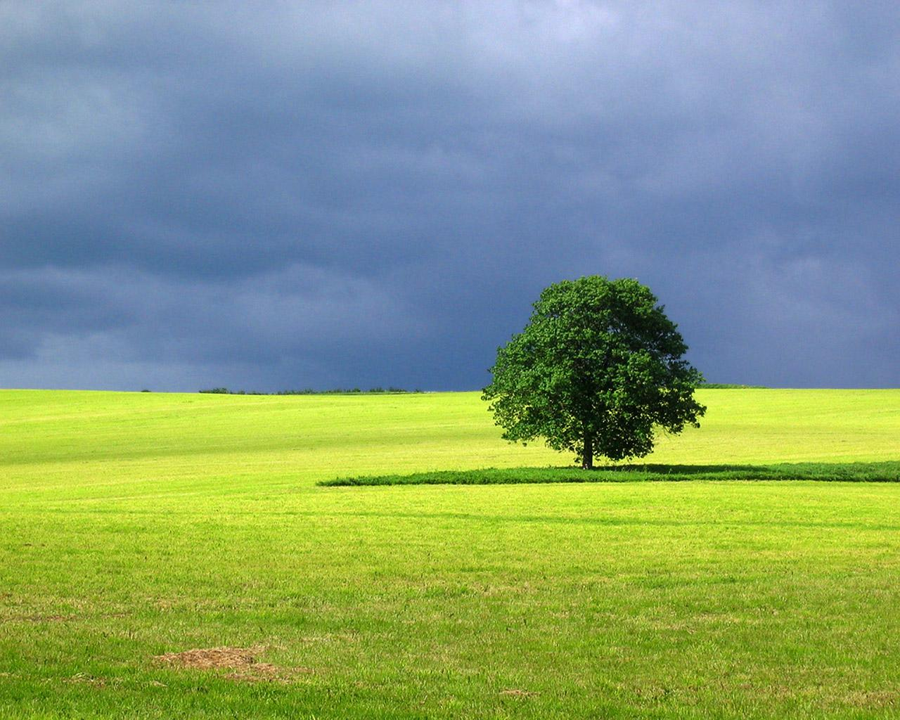 1280x1024 Landscape Tree desktop PC and Mac wallpaper 1280x1024
