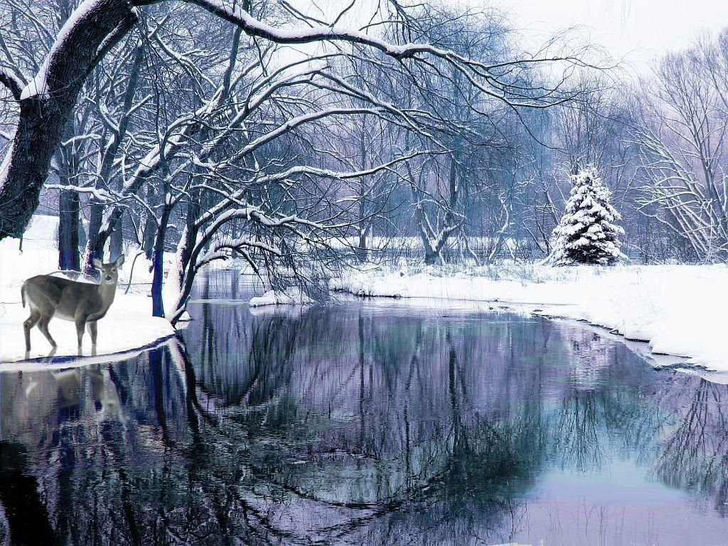 Winter Backgrounds Scenes 1024x768