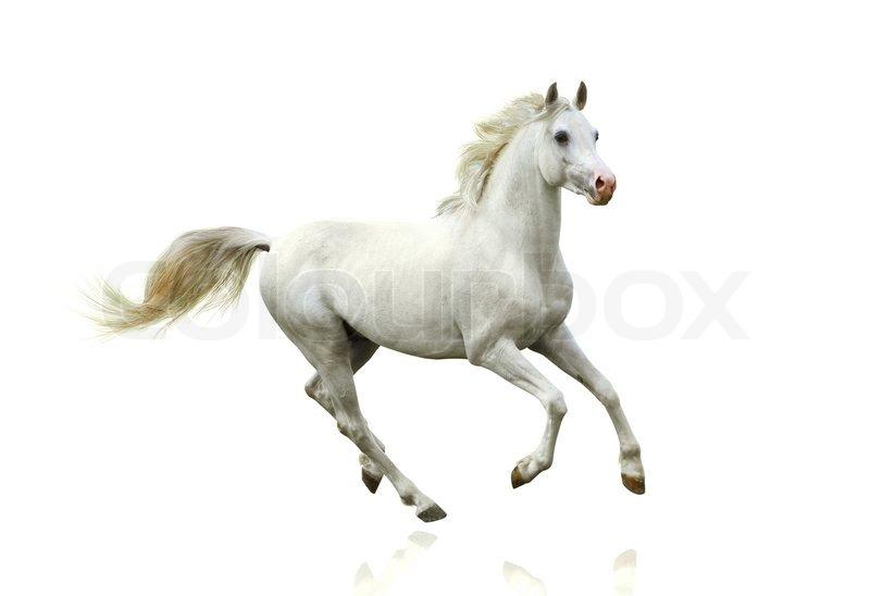 Horse White Background - WallpaperSafari
