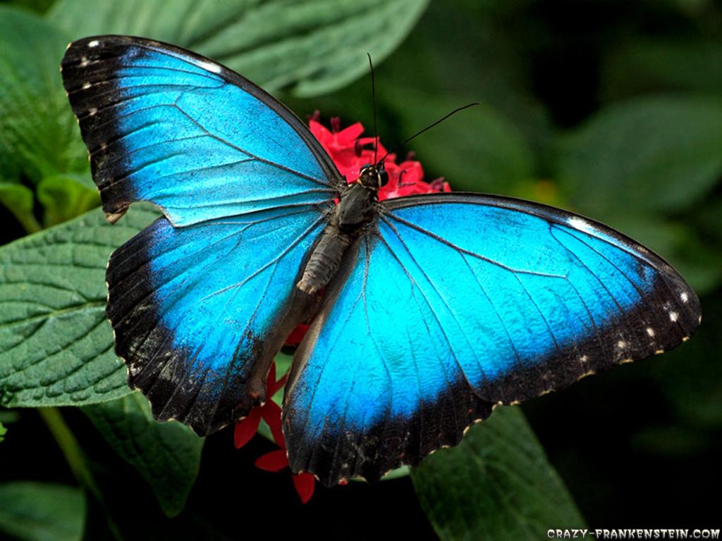 Colorful Butterfly Hd 11 Desktop Background 1024x768