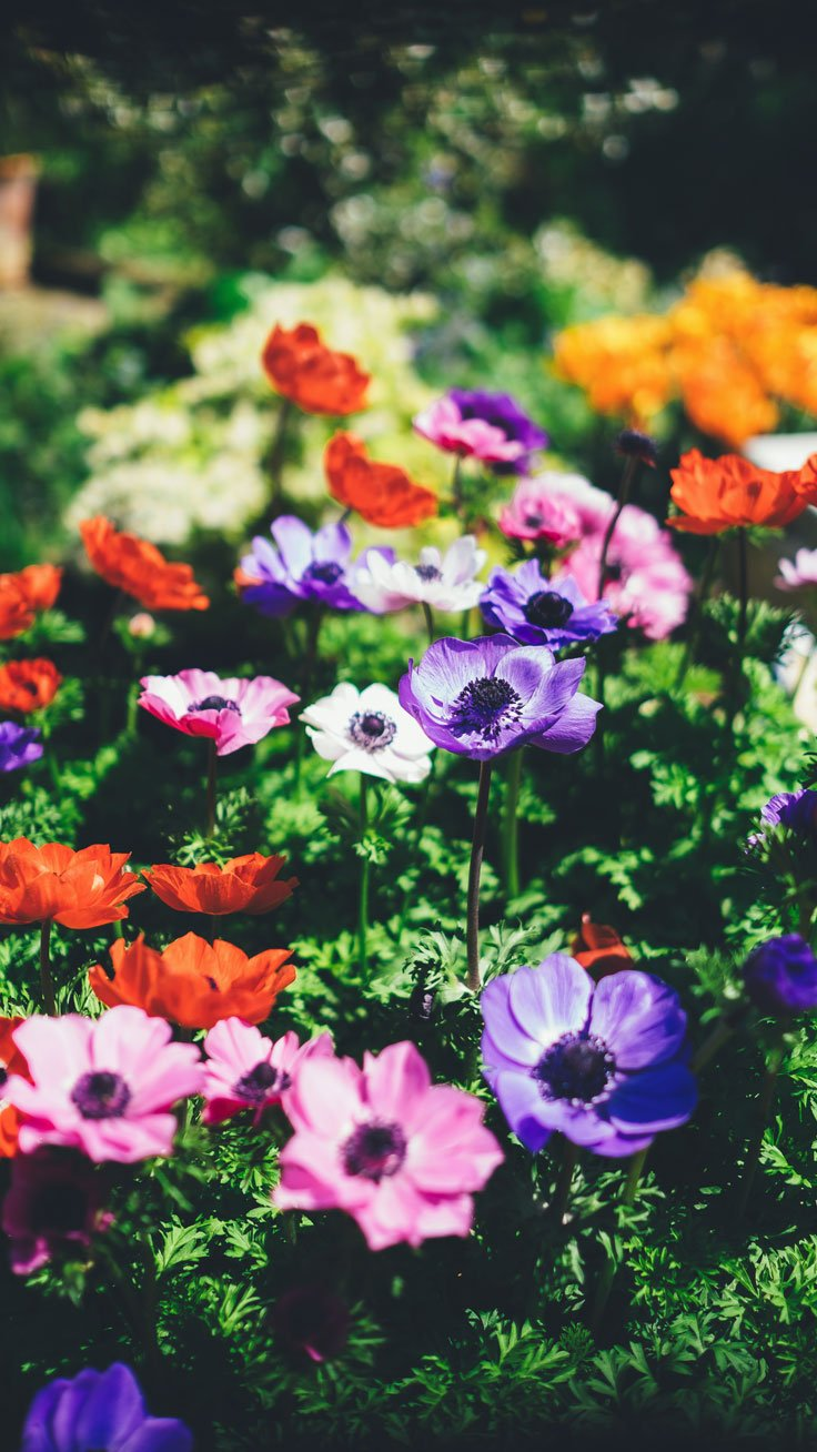 27 Floral iPhone 7 Plus Wallpapers for a Sunny Spring Preppy 736x1308