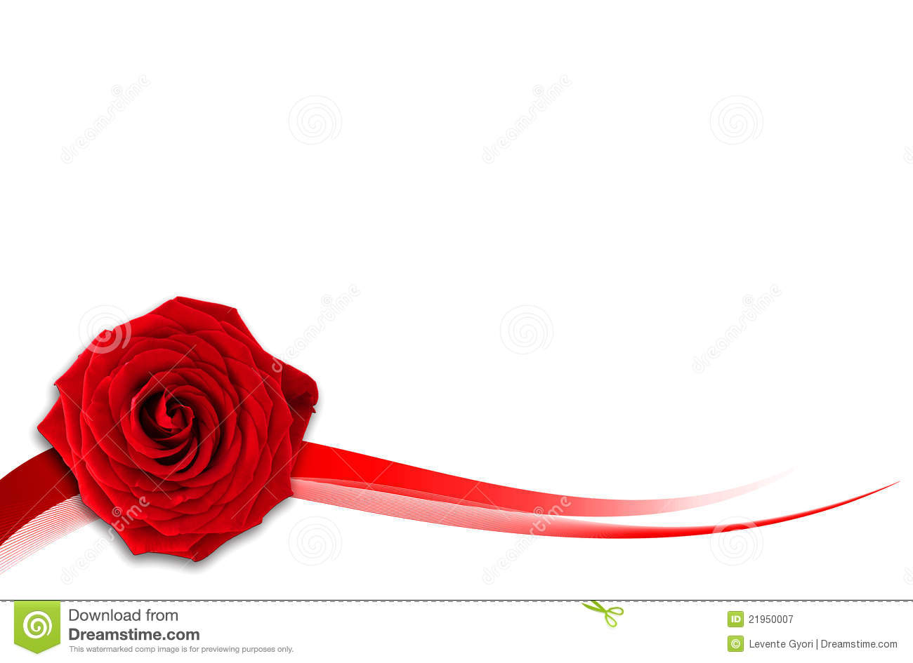 Beautiful Single Red Rose Flower Isolated Royalty Free: Red Rose With White Background