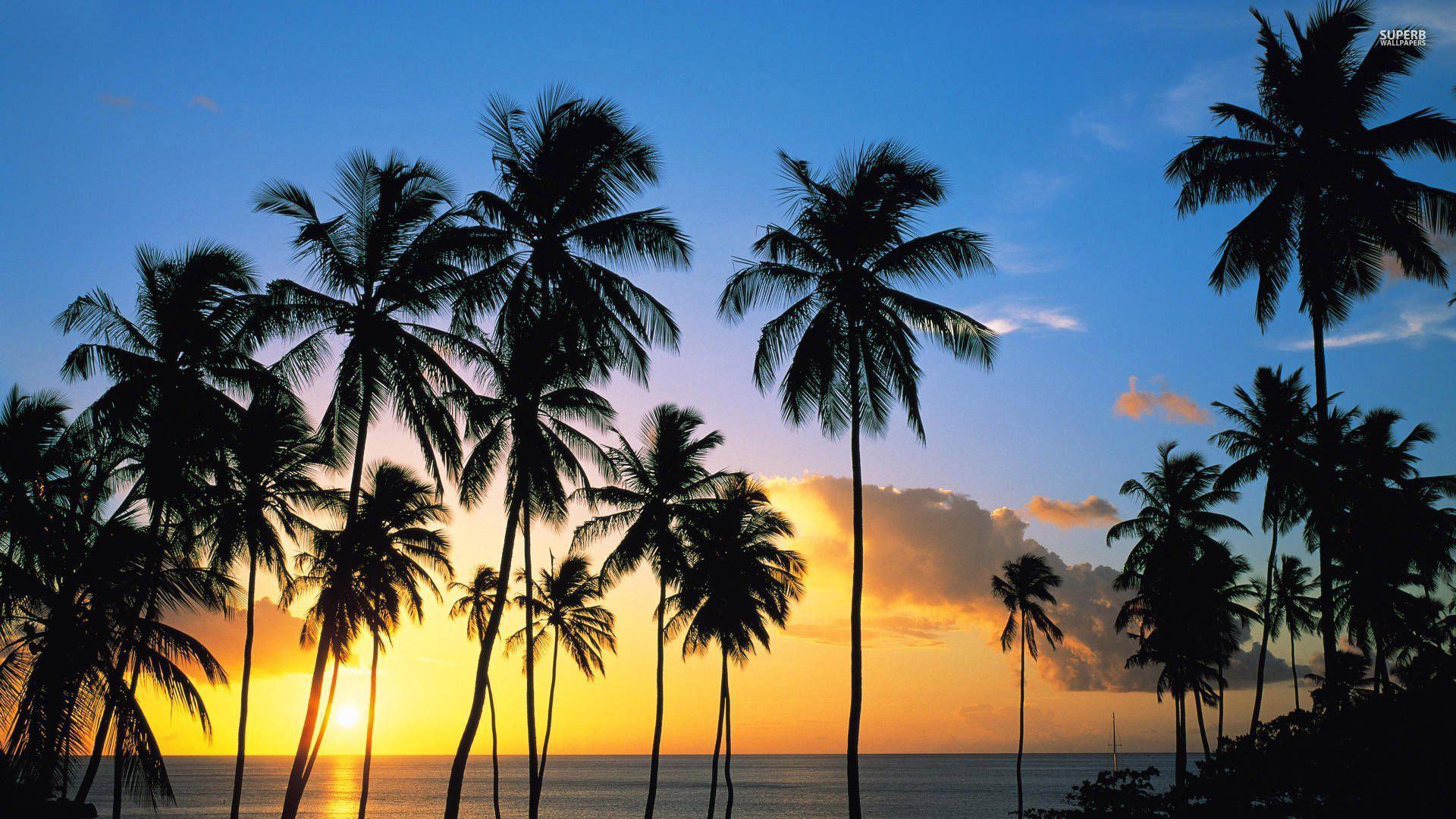 California palm trees wallpaper wallpapersafari - Free palm tree screensavers ...