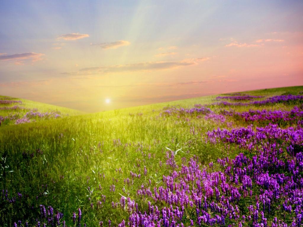 1024x768 Lavender Field Sunlight Sky desktop PC and Mac wallpaper 1024x768