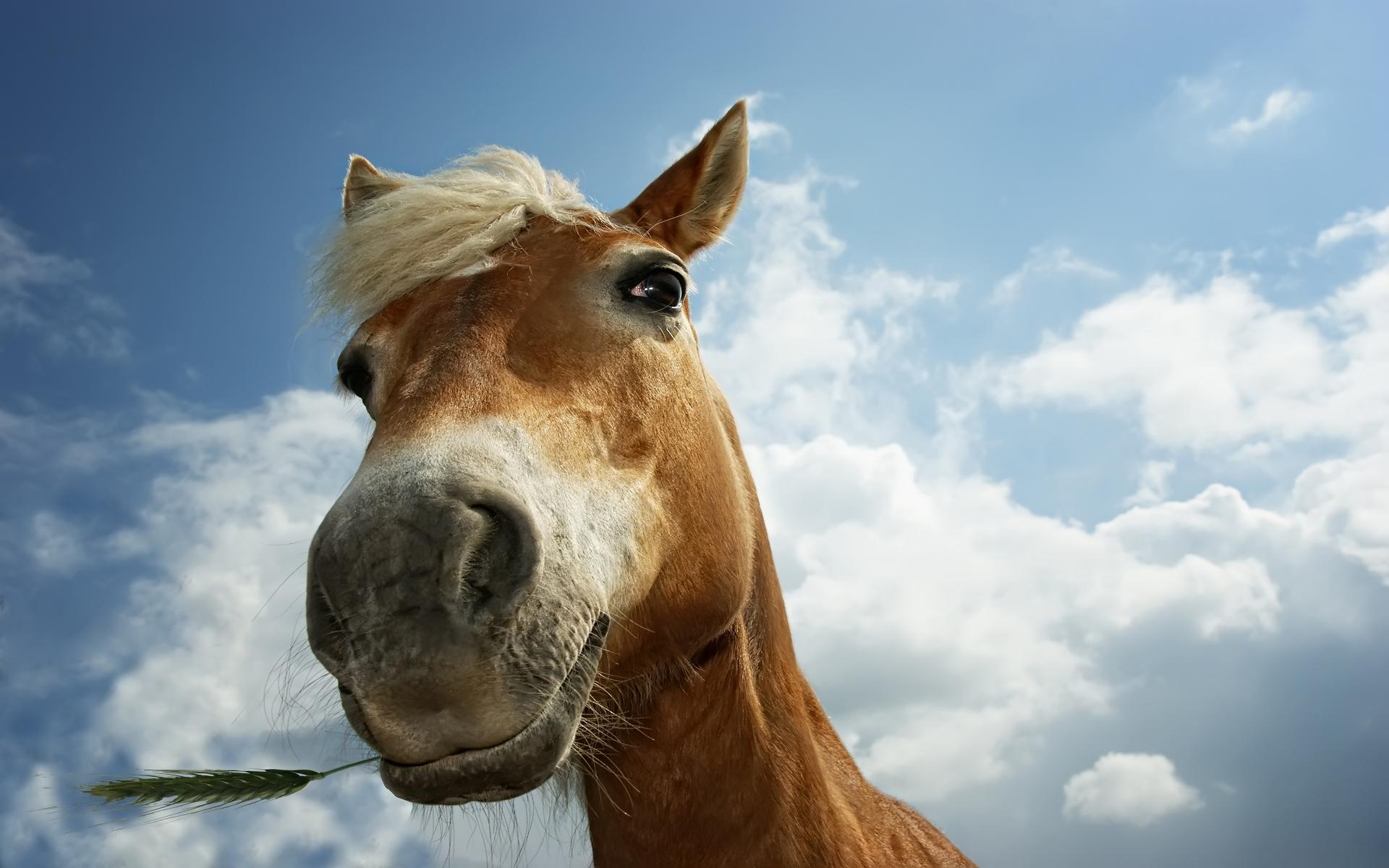 Horse wallpaper 193488 1920x1200