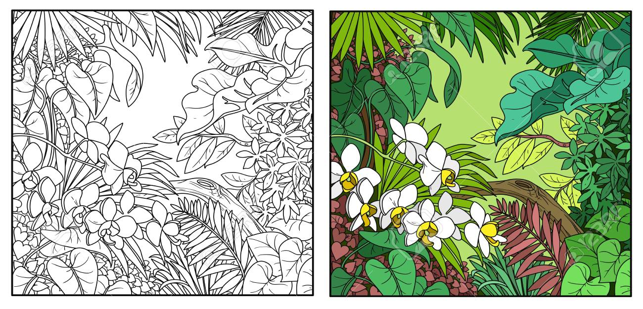 Wild Jungle Color And Black Contour Line Drawing For Coloring 1300x625