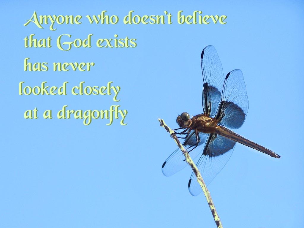 Dragonfly Backgrounds For Desktop for Pinterest 1024x768