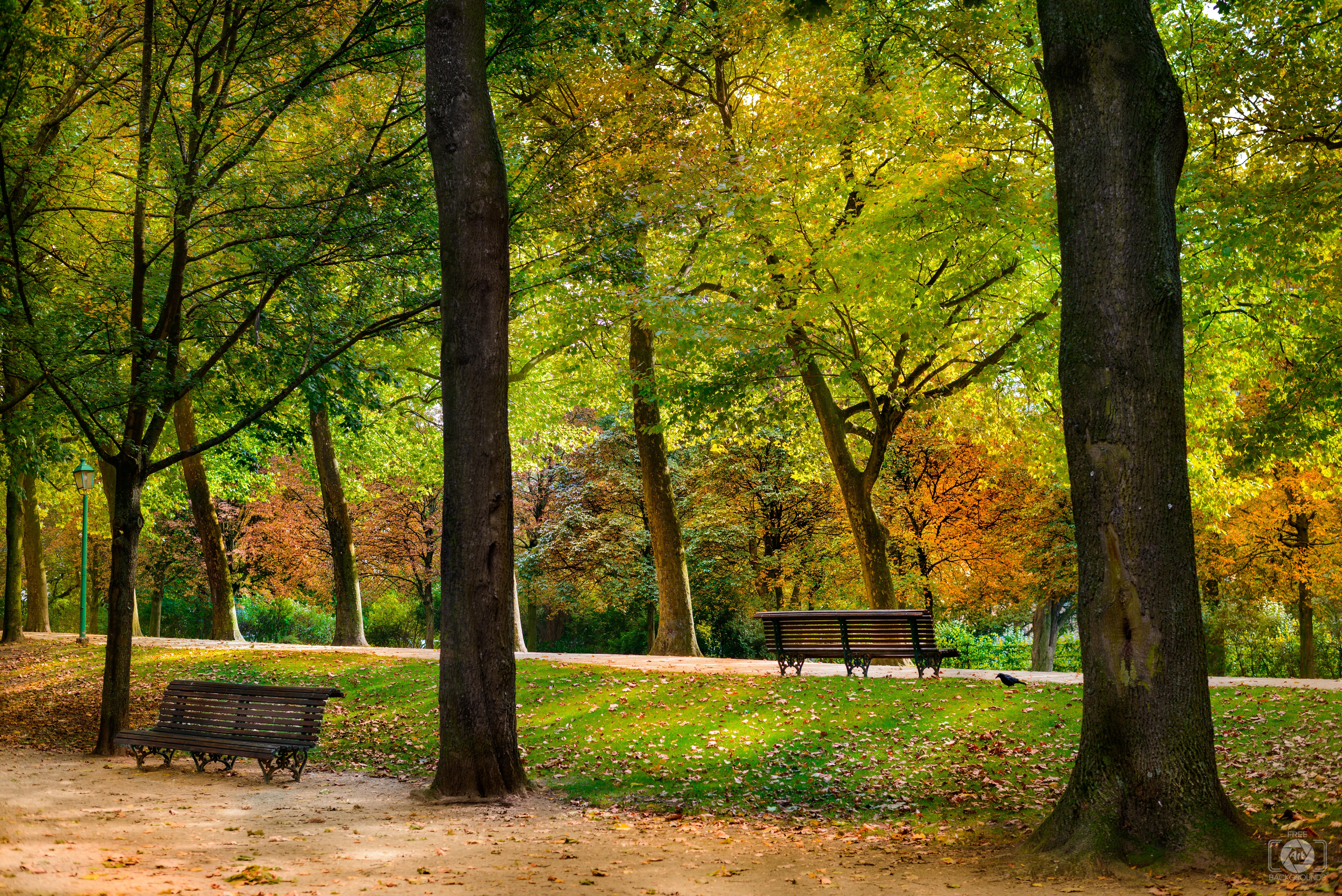 Autumn in the Park Background Background Park photography Park 7360x4912