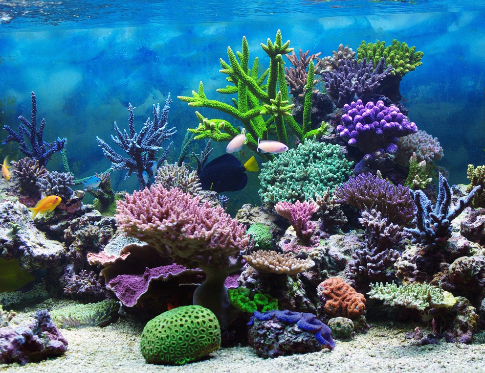 Underwater Coral Reef Wallpaper - WallpaperSafari